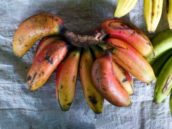 red_bananas